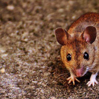 mouse control haslingden